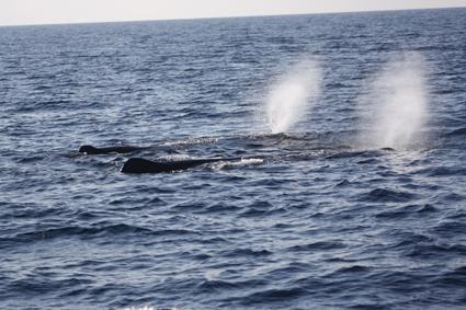 navegar con delfines
