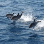 Dolphins in Mazarrón=