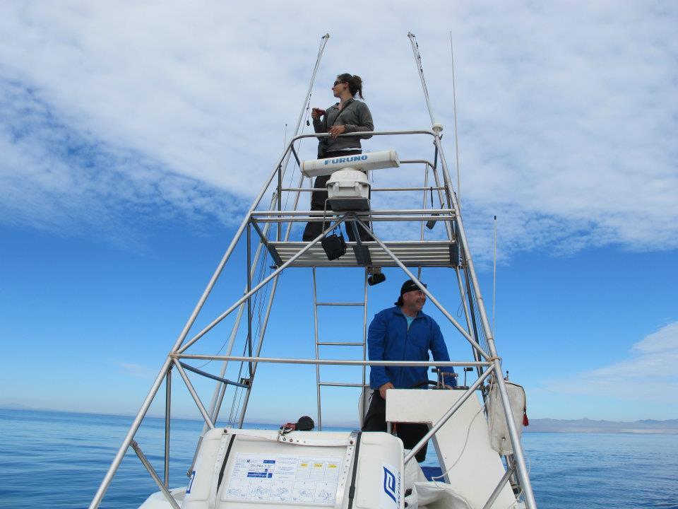 Avistando cetaceos en Murcia