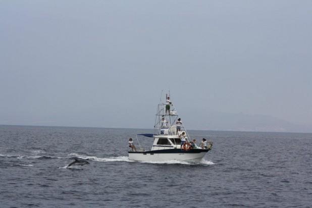 Rutas de Tierra y Mar - Observación de mamiferos marinos en la Región de Murcia