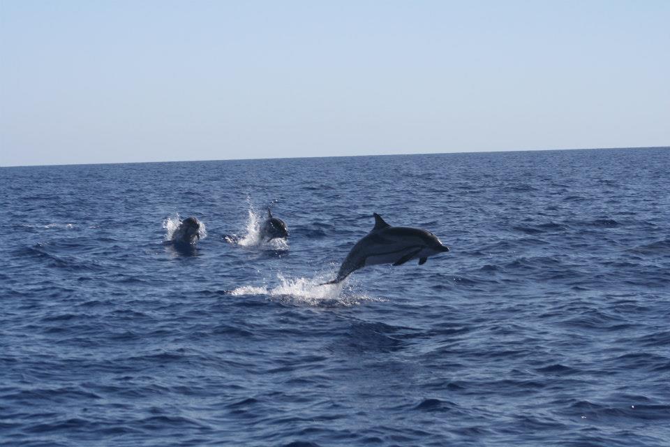 Rutas de Tierra y Mar - Avistamiento de cetáceos en la Región de Murcia