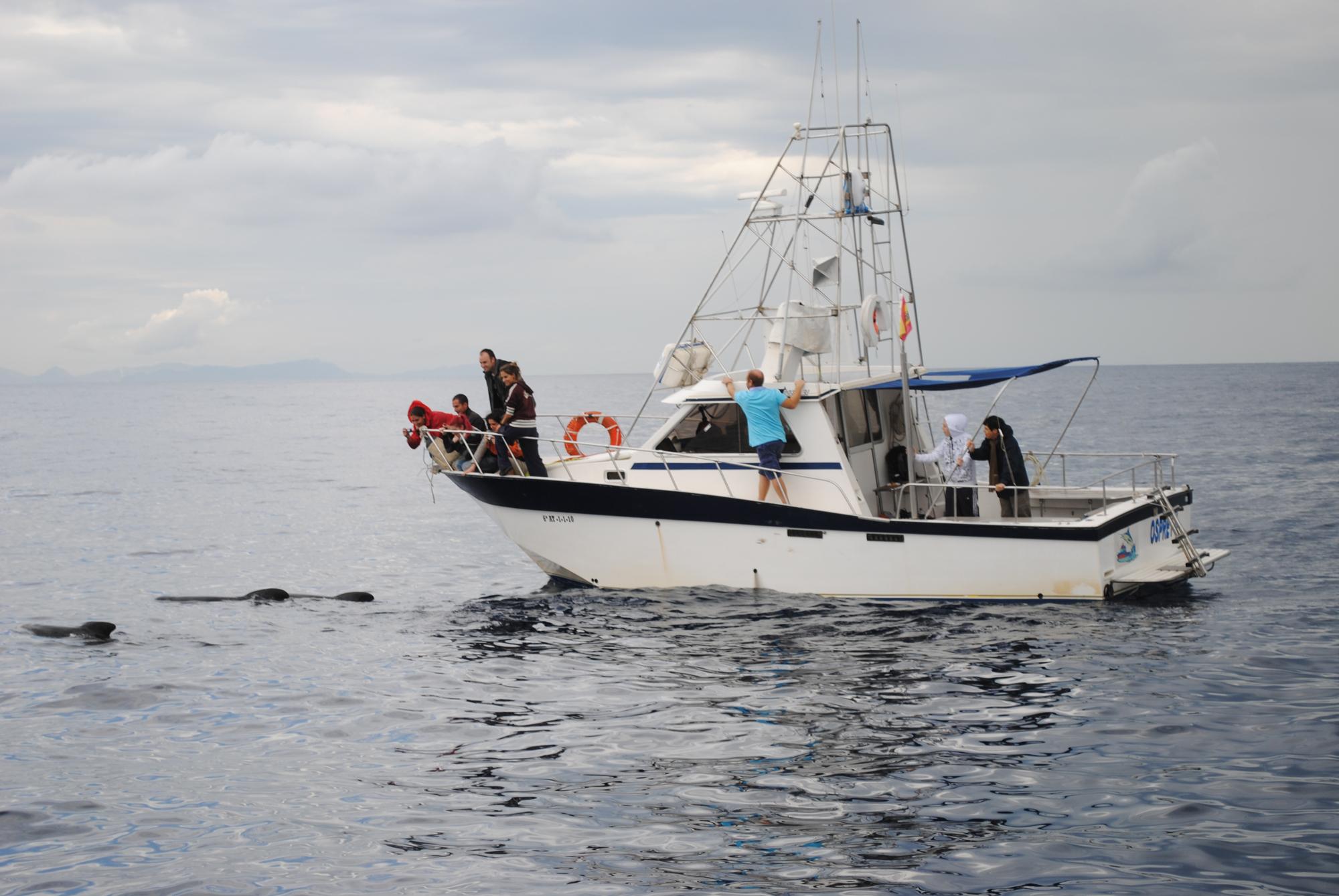 Ver delfines en Mazarron