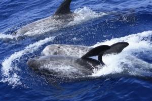 Buscar cetáceos