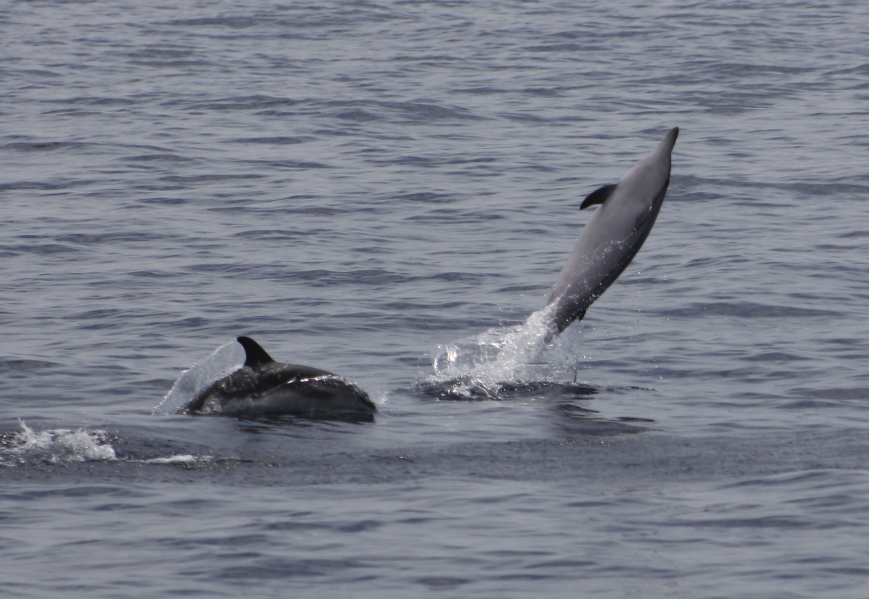 Ver Delfines