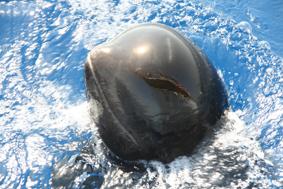cetaceos en Mazarron