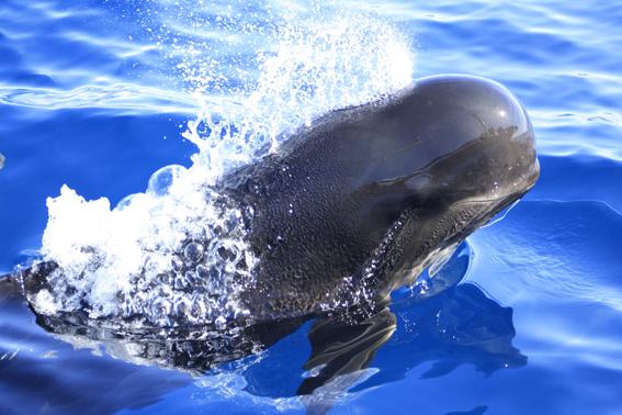 Rutas de Tierra y Mar - Observación de delfines y ballenas en la Región de Murcia