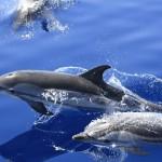 Delfines listados