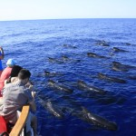 Photographing pilot whales