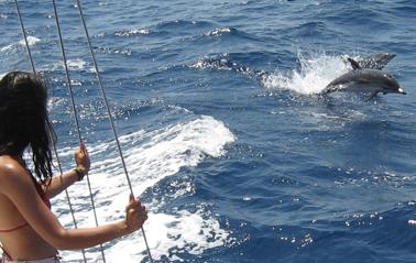 observando fauna marina