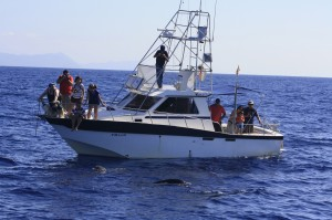 Barco para avistar cetaceos