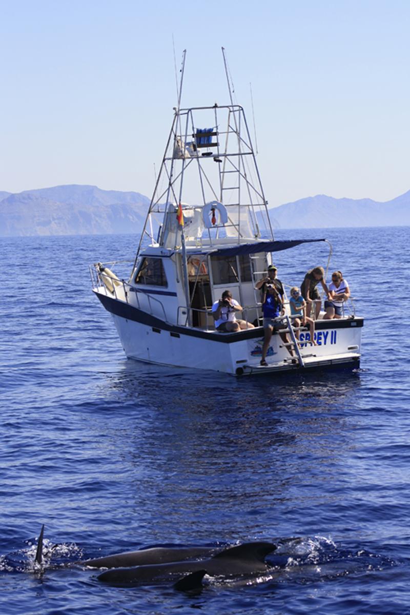 avistamiento de cetaceos en Mazarron